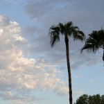 Palms for desert island picture