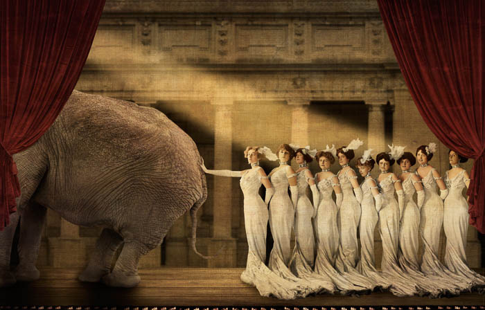 Elephant in the Room Corinne Geertsen