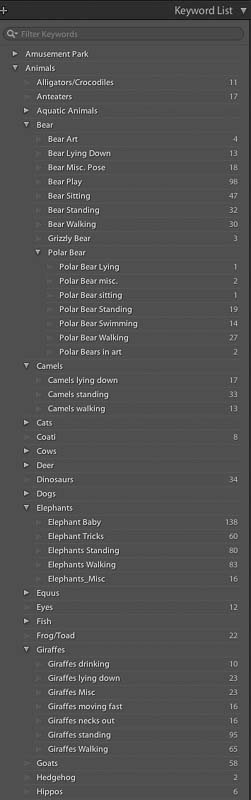 Lightroom categories